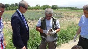 'Canlı mühre' keklikler tedavi edilip doğaya bırakıldı
