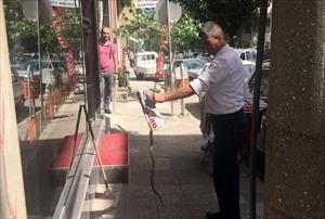 Esnafa saldıran yılanı eliyle yakaladı