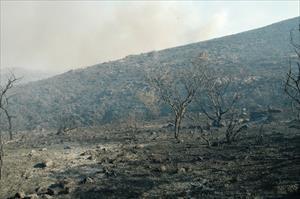 Tam 121 hektar kül oldu