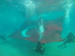 Su altında dev Türk bayrağı açtılar