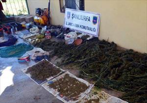 Ceylanpınar'da uyuşturucu operasyonu