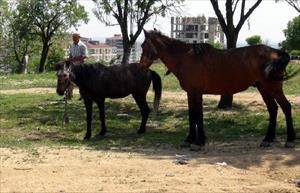 5 bin lira maaşlı çobanın yakaladığı atlar satışa çıkarıldı