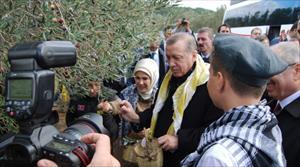 Erdoğan ve eşi zeytin topladı
