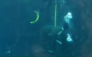 Köpek balığı görevliye böyle saldırdı