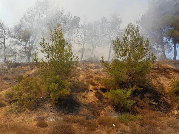Ayrancılar'da orman yangını
