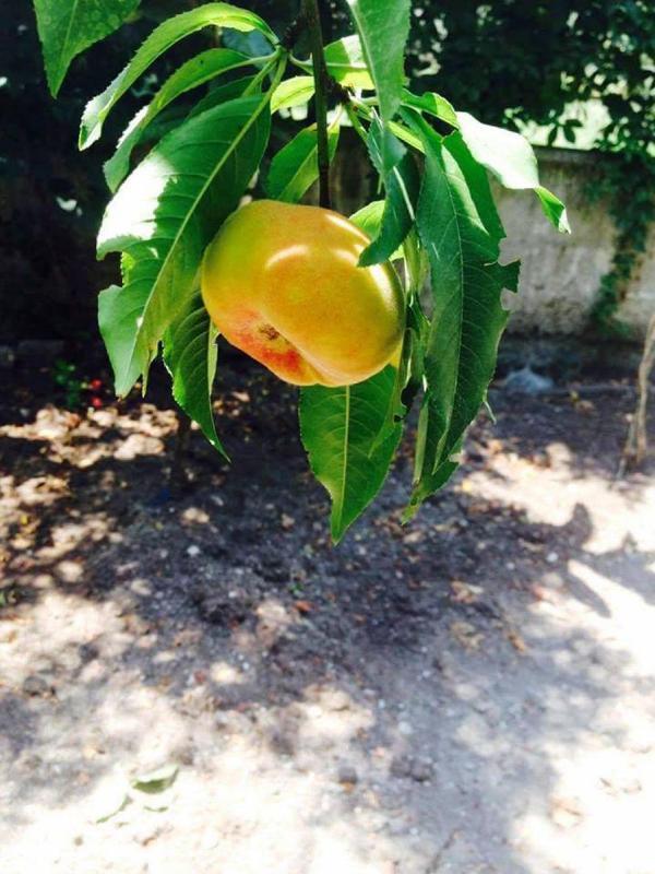 Küçücük bahçeden 'cennet' yarattı