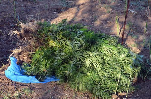 Bolu'da hintkeneviri ve kaçak sigara operasyonu