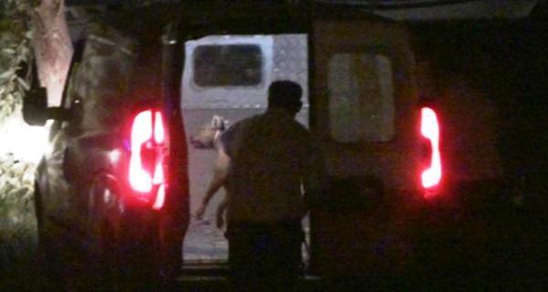 İzmir'de Pitbull 3 kişiye saldırdı