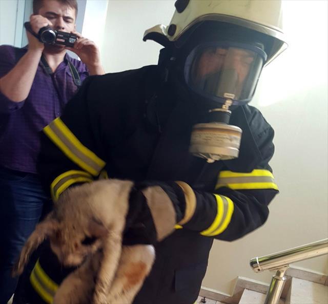 Kedi, banyoda saklanarak yangından kurtuldu