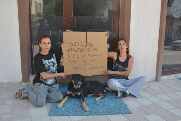 Sokak hayvanları için belediye önünde açlık grevi yapıyorlar
