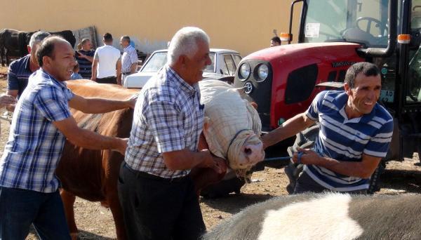 Yozgat'ta 32 acemi kasap hastanelik oldu