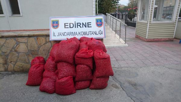 Enez'de 600 kilo kaçak midye ele geçirildi