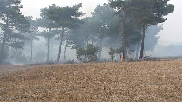 Ormanlık alana da sıçrayan anız yangını söndürüldü