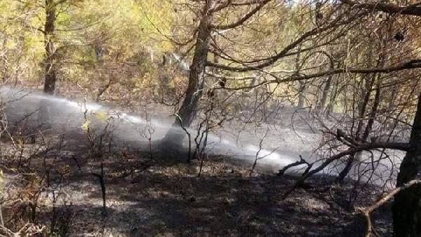 Gelibolu'da orman yangını büyümeden söndürüldü