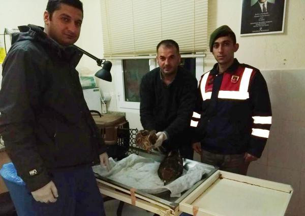 Yaralı yavru şahinler korumaya alındı