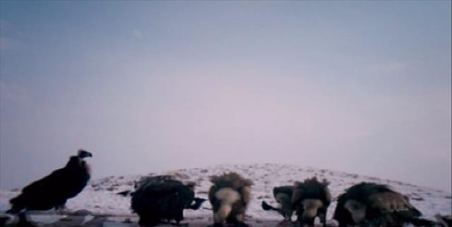 Akbabalar foto kapana yakalandı
