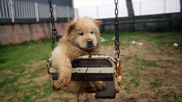 Polisin iyileştirdiği yavru köpekler sahiplendirilecek
