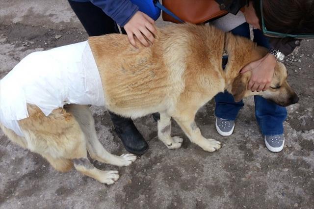 Kaybolan köpek bu halde bulundu: