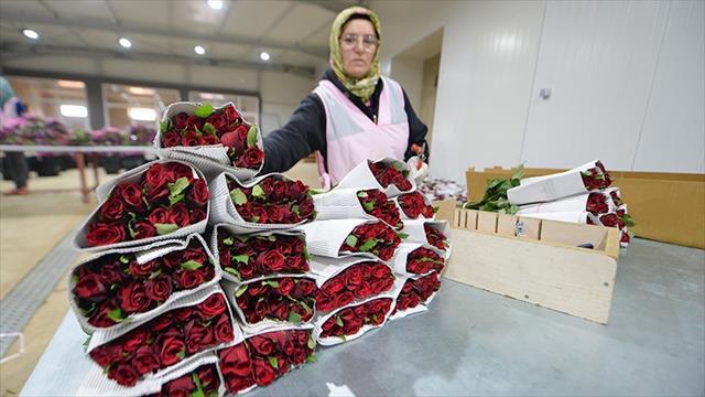 Çiçek ihracatında 2018 hedefi 100 milyon dolar