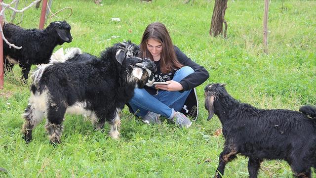 Cumhurbaşkanı Erdoğan'dan koyun otlatırken kitap okuyan Kader'e davet