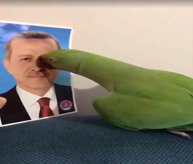 Cumhurbaşkanını tanıyan papağan…