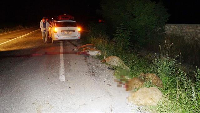Sürüye otomobil çarptı: 22 koyun telef oldu