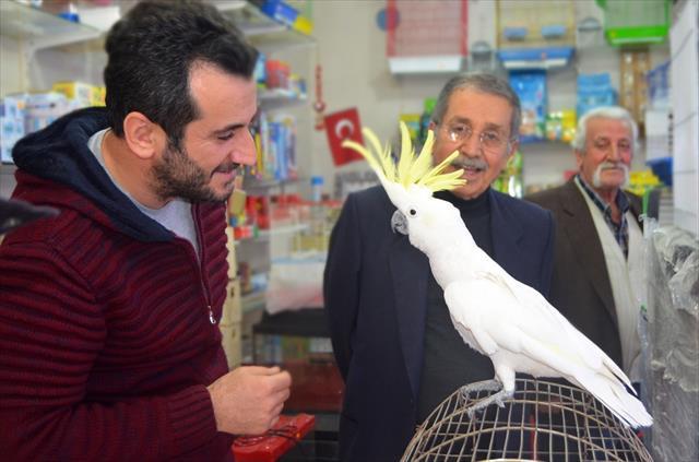 Papağana 42. yaş günü kutlaması