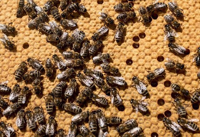 Yarım milyon arının ölümüne yol açan çocuklara gözaltı