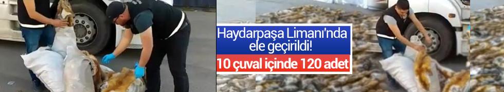120 adet kaçak tilki kürkü ele geçirildi