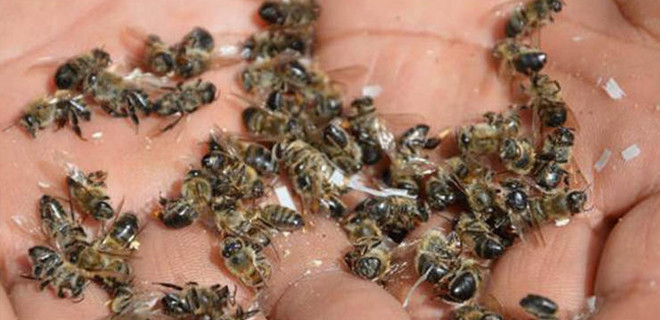 Şanlıurfa'da korkutan arı ölümleri!