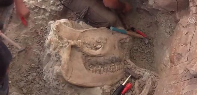 8.5 milyon yıllık olduğu düşünülüyor...