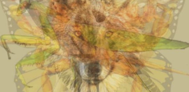 İlk başta hangi hayvanı gördünüz?