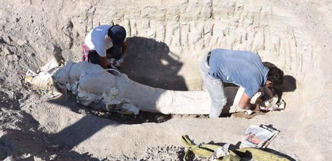 Çoban buldu! 7,5 milyon yaşında...