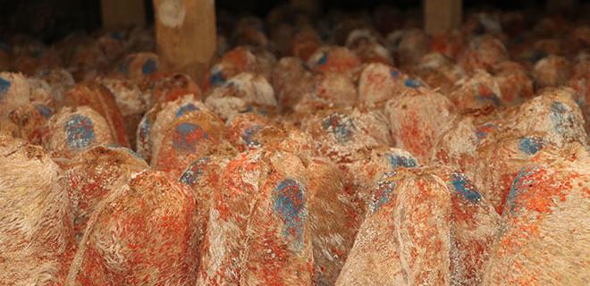 Mağaradan çıkan lezzet: Sadece 45 ton var!