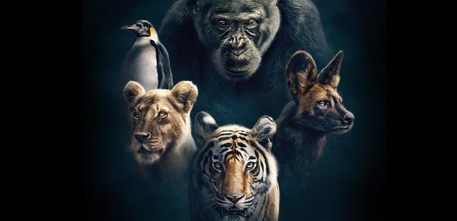 BBC Earth'ün yeni belgesel dizisi Soylar (Dynasties) başlıyor