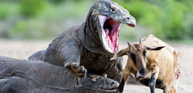 Dünyanın en tehlikeli canlıları arasında...