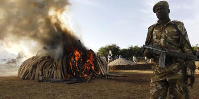 Kilosu 3 bin dolardı, 15 ton yaktılar!