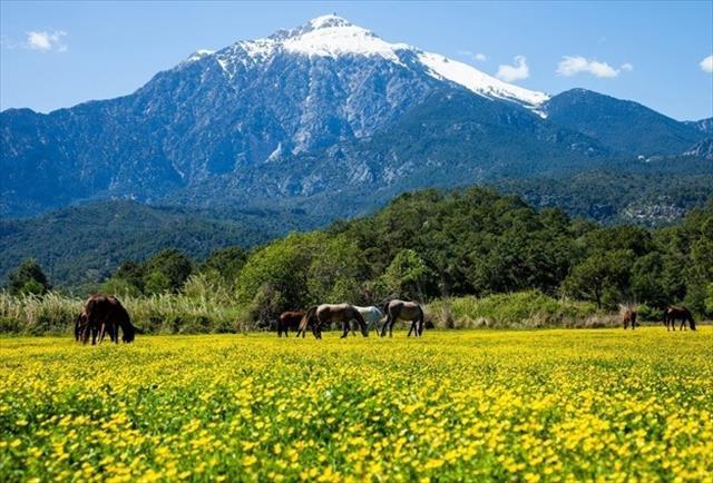 Antalya Çiçek Festivali Fotoğraf Yarışması sonuçlandı