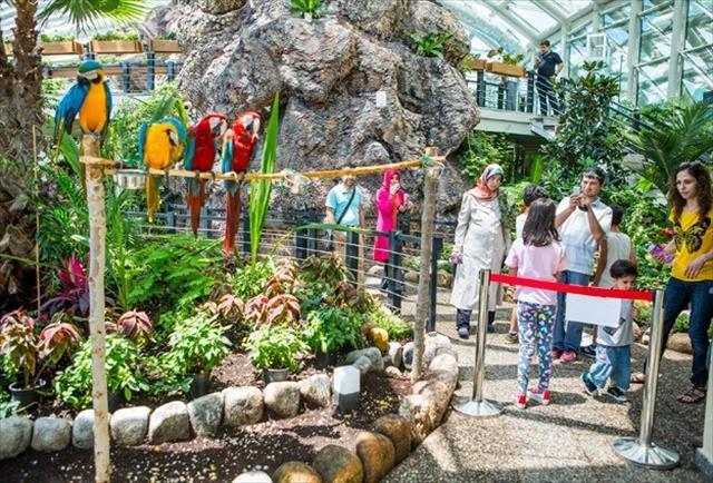 Tropikal Kelebek Bahçesi'ne basın turu