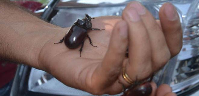 Böceği evden resmi tutanakla aldılar