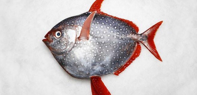 Bu balığın öyle bir özelliği var ki!