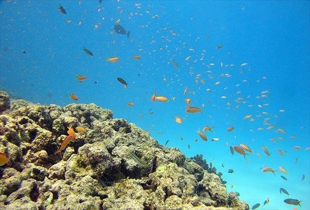 Okyanuslardaki asitlenme besin zincirini değiştiriyor