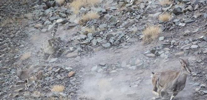 Fotoğraftaki leoparı gördünüz mü?