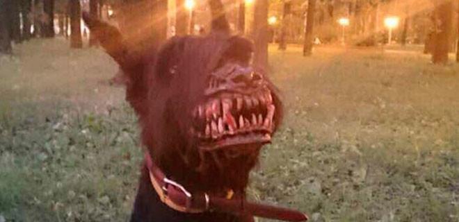 Siz hiç böyle bir köpek gördünüz mü?