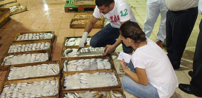2 bin 300 kg balığa el koydular