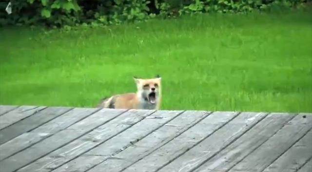 Haydi dostum dışarı çık da oynayalım !