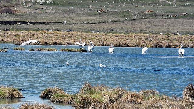 Çıldır Gölü göçmen kuşlarla renklendi