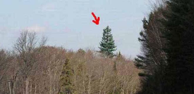 Sıradan bir ağaç gibi ama..