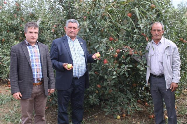 250 bin elma ağacı odun olacak