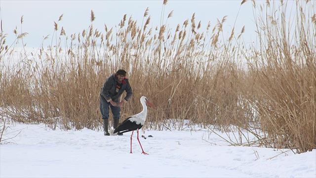 Sürüden ayrılan leyleği balıkçılar besliyor